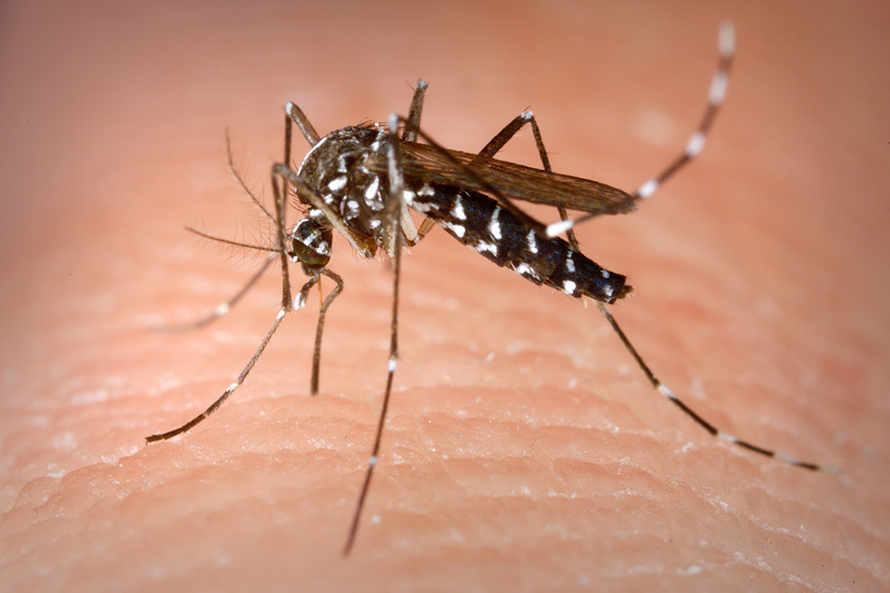 Mosquitoes in Thailand: Everything You Need to Know!